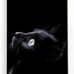 Чехол Apple iPhone 5: Черный Кот (арт.1591)
